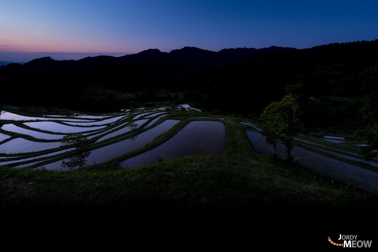 Rice Terraces at Dawn