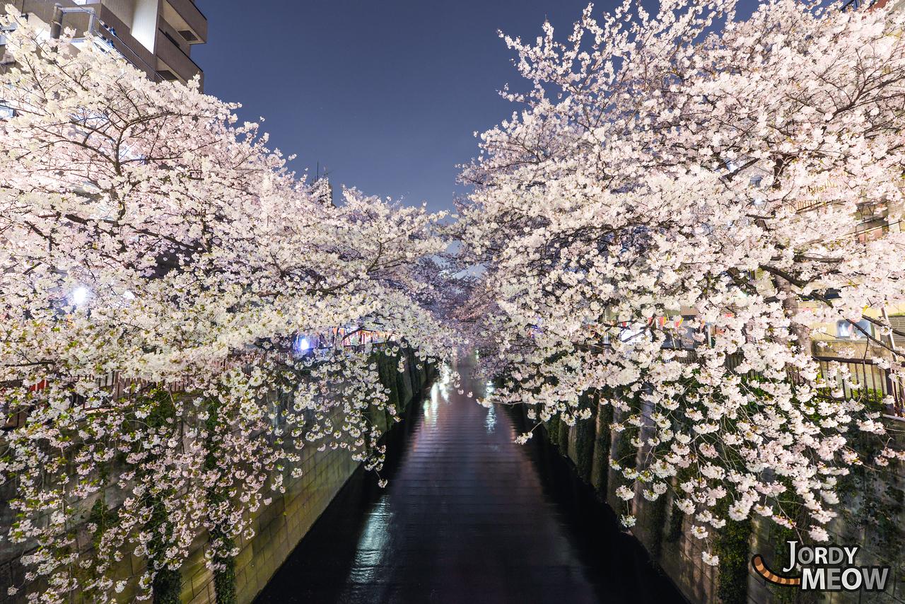 Naka-Sakura