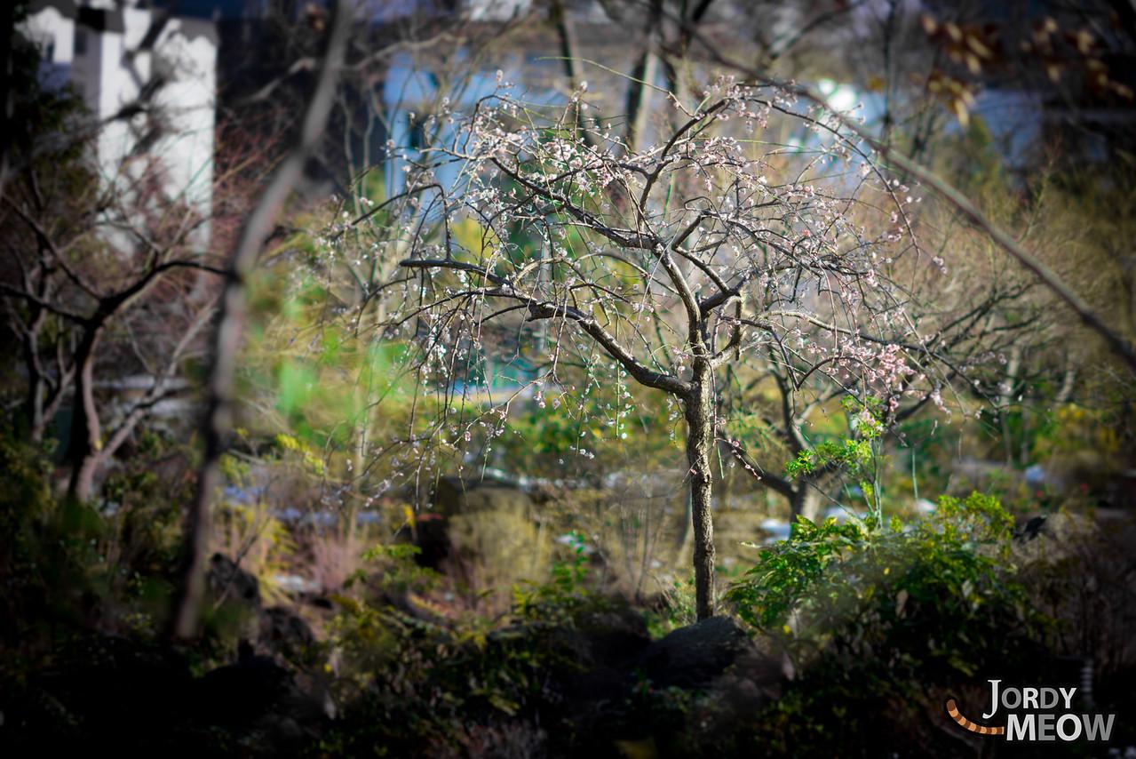 Between Winter & Spring