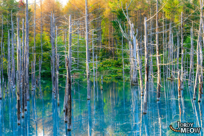 Aoike: The Blue Pond
