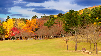 Autumn colours in Nara