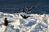 Steller's_Sea_Eagle_2019_Fighting_Hokkaido_Japan_0026