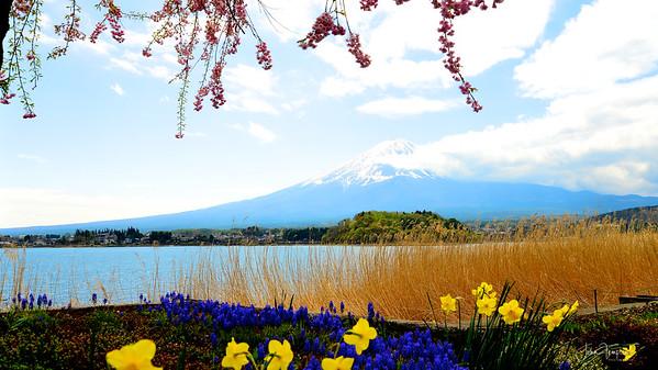 Fuji to Tsumago