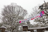 Saturday, Feb. 8 was the opening day of the Plum Blossom Festival at Koishikawa Korakuen and other gardens in Tokyo.