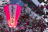 The text on the lantern names this place: Harimaska Sakura Street.