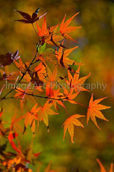 Autumn in Yoyogi Park, Tokyo, Japan
