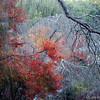 Tenryuji in Autumn