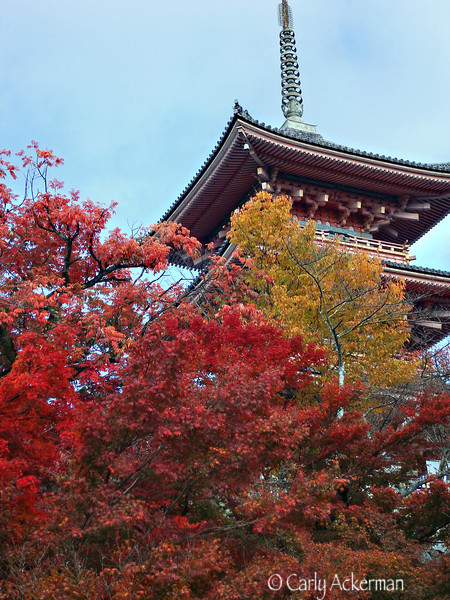 Nara Hokki-ji in Autumn