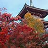 Nara Hokki-ji in Autumn