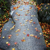 Fallen Leaves Takayama