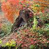 Arashiyama Rooftop