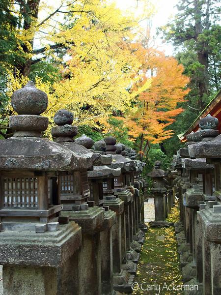 Nara Lanterns