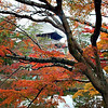 Isuien Garden in Autumn