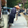 Autumn Prayer Nara