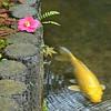 Tenryu-ji in Spring
