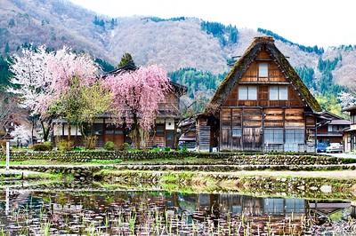 Spring season at Shirakawagō 白川郷