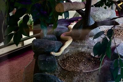Shirohebi (White Snake) Museum