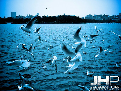 """Fukuoka Gulls #1"", Fukuoka, Japan, 2006 Print PMJ06-194"