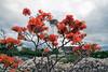Goryokaku Tower from Goryokaku Park with Azaleas Blooming