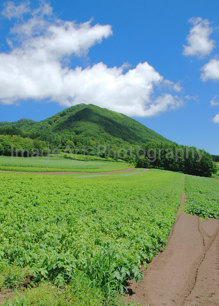 Beautifully tended field of vegetables