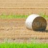 A single hay bale in a field of cut wheat