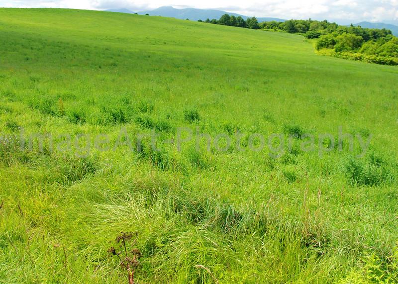 Beautiful green grass field