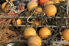 """'Pumpkins' (best larger)<br /> <br /> Happy Halloween!<br /> <br /> Sorry, best I could do for pumpkins and fall grasses here in Japan.  Fishing floats and coiled ropes, taken at the harbour in Naruto, Shikoku Island.  I headed to Shizuoka and the Mount Fuji area this morning on the Bullet Train (Shinkansen) to give some more talks, but hopefully also get some shots of Mt. Fuji in the fall.<br /> <br /> 31/10/14  <a href=""""http://www.allenfotowild.com"""">http://www.allenfotowild.com</a>"""