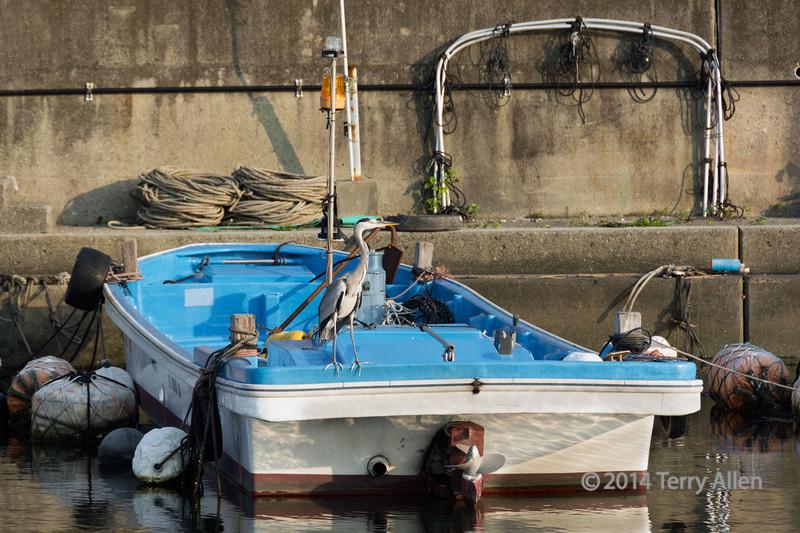 Hanging out on a fishing boat<br /> <br /> Grey heron, Naruto Harbour, Shikoku Island, Japan