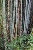 Study in bamboo #7