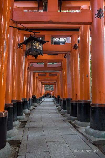 Receedng torii gates, Fushimi Inari Taisha Shinto Shrine, Kyoto, Japan