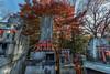 Offerings of wooden torii gates at the Ichi no mine kamisha, Fushimi Inari Taisha, Kyoto, Japan