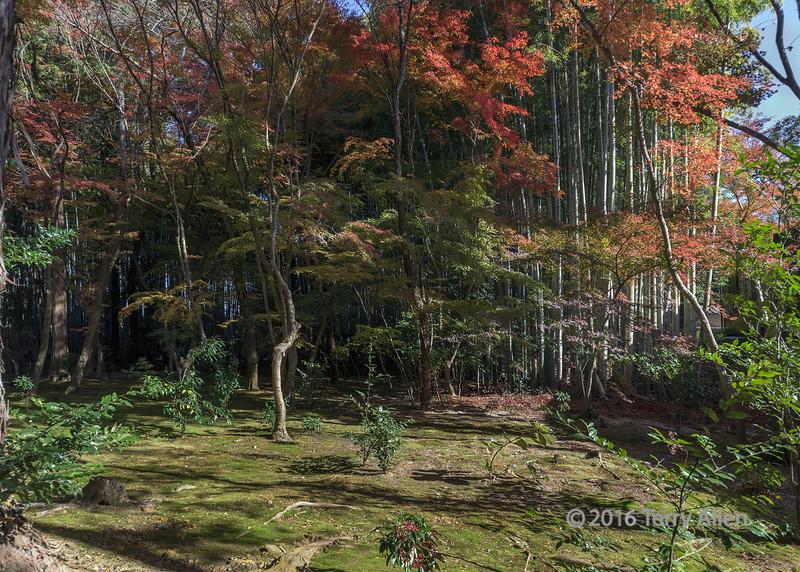 Jizo-in Zinai Buddhist (Take no tera or bamboo) temple garden with fall leaves, Kyoto, Japan