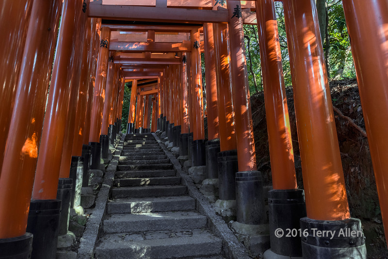 Sunrise hitting the torii gates near the top of Inari Mountain, Fushimi Inari Taisha, Kyoto, Japan
