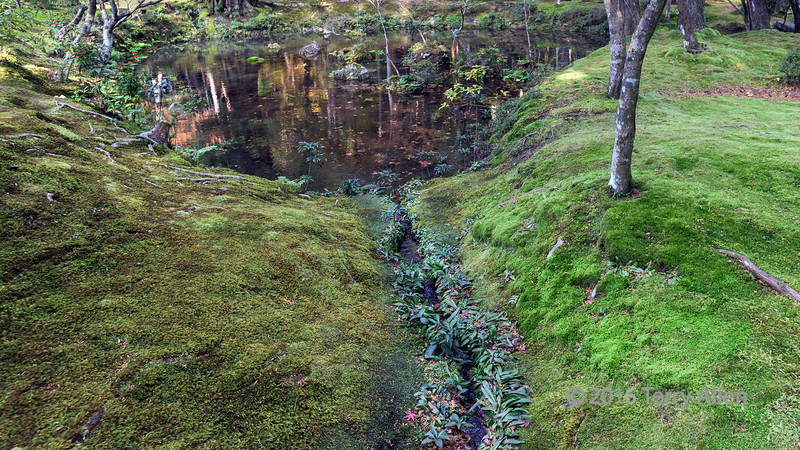Pond and rivulet running through the mosses at the moss temple (Hokoku-ji also called Takedera), Kyoto, Japan