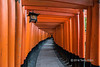 Hiker disappearing down the vermillion tunnel, Fushimi Inari Taisha Shinto shrine, Kyoto, Japan