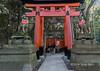 Fox statues (kitsune) and torii gates, Fushimi Inari Taisha Shinto Shrine, Kyoto, Japan
