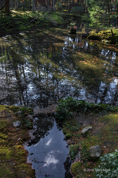 Fall leaves and reflections, Saiho-ji, Kyoto, Japan