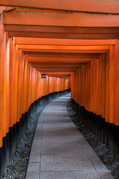 The red tunnel, torii gates, Fushimi Inari Taisha Shinto shrine, Kyoto, Japan