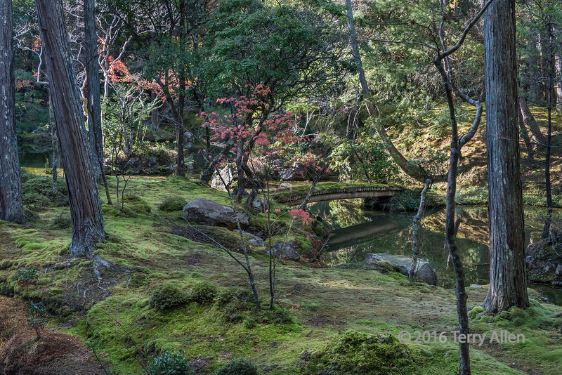 Moss-covered bridge and fall leaves, Saiho-ji, Kyoto, Japan
