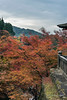 Taisan-ji pagoda with Japanese maples, seen across the valley from the Honden, Kiyomizu Dera, Kyoto, Japan