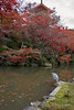 Japanese grey heron with red maples leaves and pagoda, Kiyomizodera, Kyoto, Japan