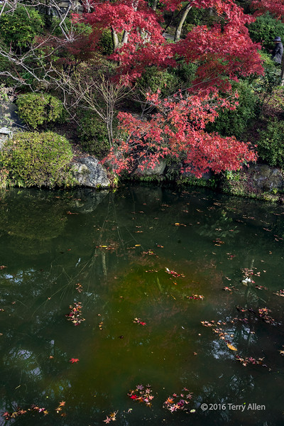 Pond with reflections and floating red leaves, Kiyomizu Dera, Kyoto, Japan