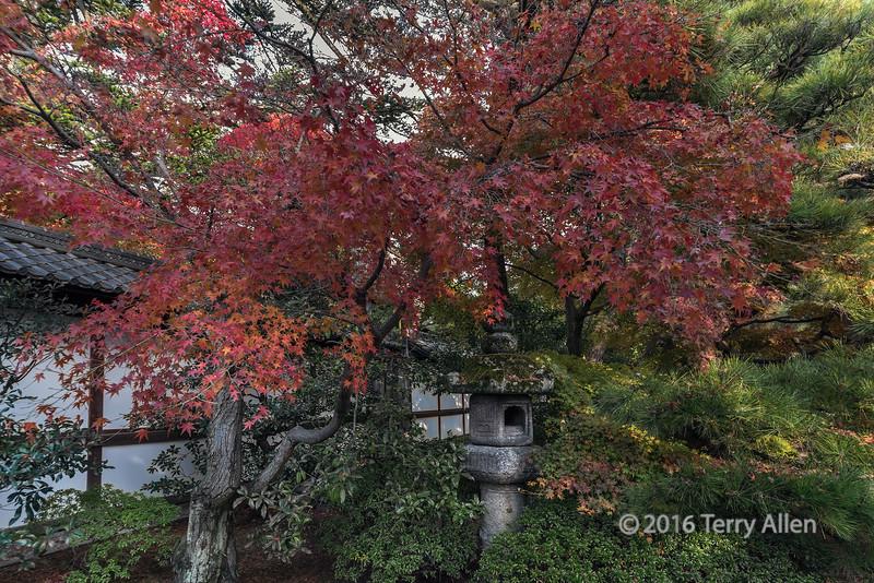 Japanese maples with stone lantern