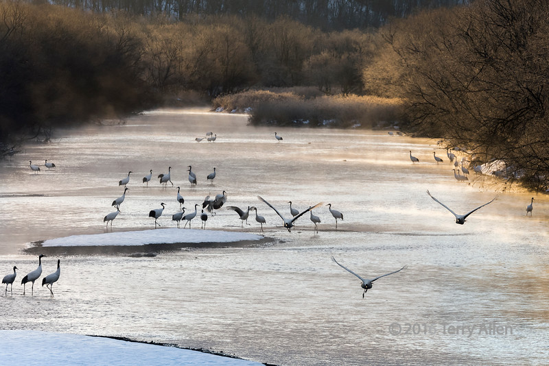 River mists and flying cranes