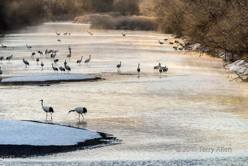 Sunrise mists with cranes on the Setsuri River, Hokkaido, Japan