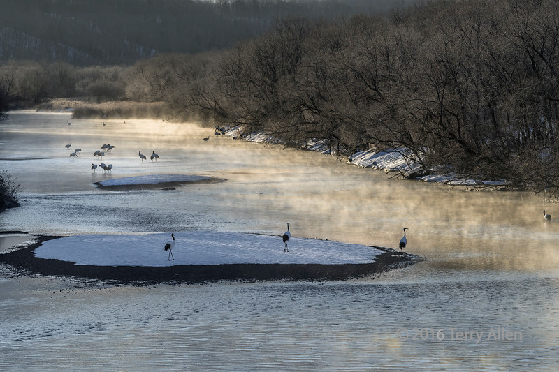 River mists and cranes at sunrise, Setsuri River, Hokkaido, Japan