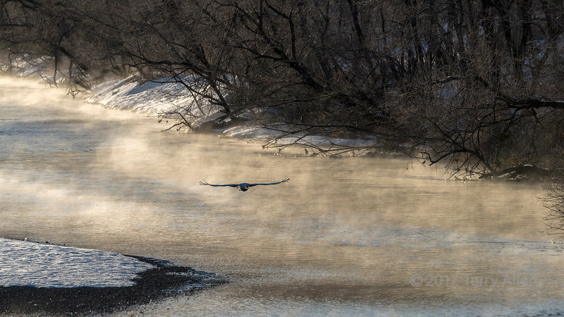 River mists with crane