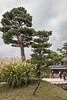 Ichi no mon (Kurumon) to Matsumoto Castle with black pine trees (Pinus thunbergii) and pampas grass (Miscanthus sinensis), Nagano, Japan<br /> <br /> add keywords