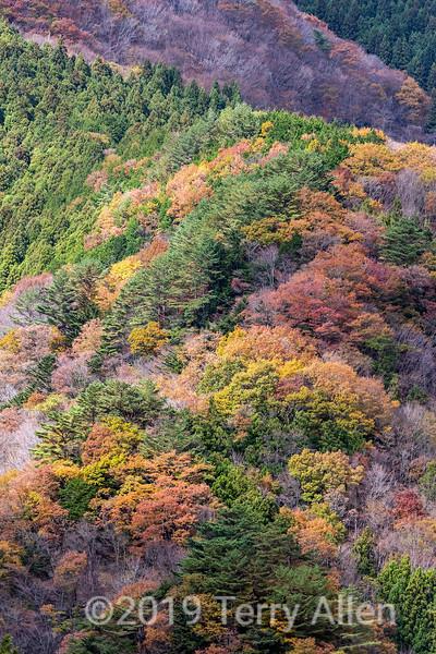 Fall leaves in the Iya Valley gorge, Miyoshi, Tokushima, Japan