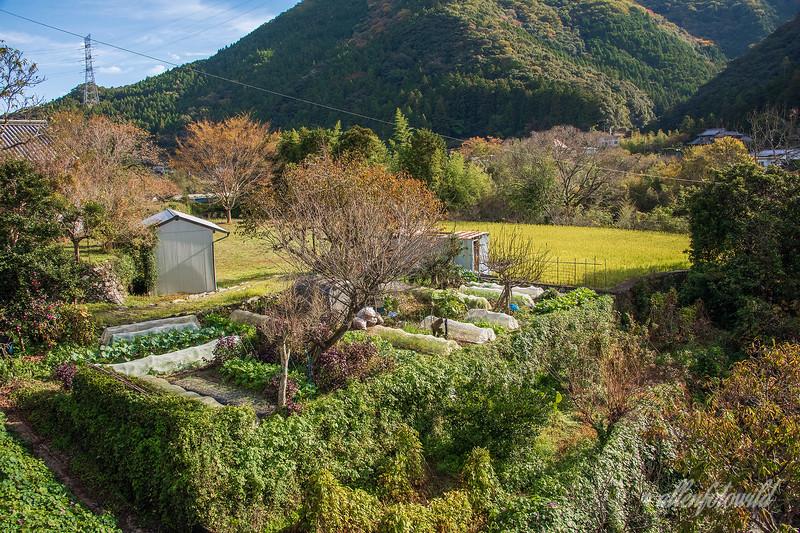 Backyard vegetable garden and rice paddy, Kamiyama, Shikoku Island, Japan